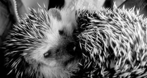 Oli the hedgehog by fashion-bug