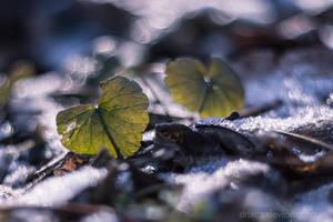Fragile Beauty by StrixCZ