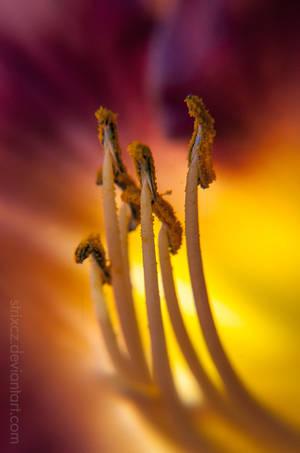 Bumblebee Shrooms
