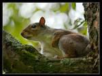 Mr squirrel 2 by Alexandra35