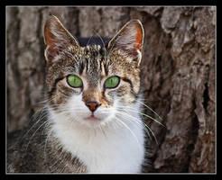 Mr. Cat by Alexandra35