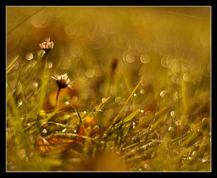 Morning dew 3 by Alexandra35