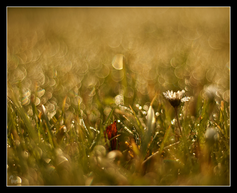 Morning dew 4 by Alexandra35