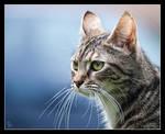 Mrs Cat