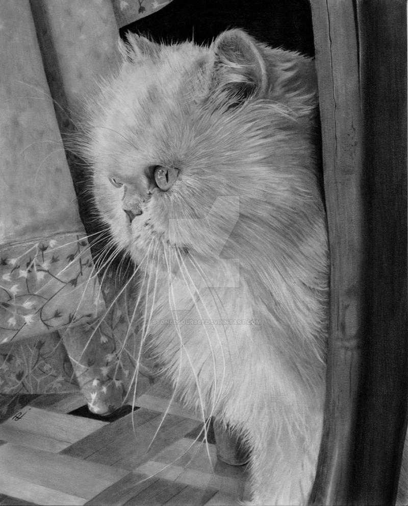 Cream persian cat by stonedsour887