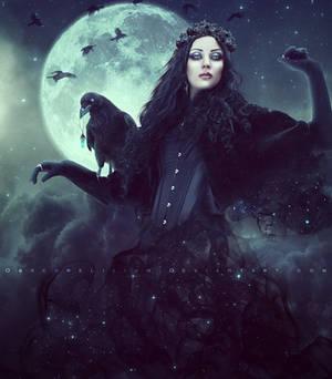 Corvus Regina