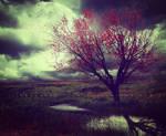 Melancholy Fields