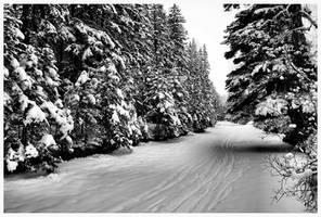 Winter walk by bluewave