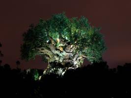 Animal Kingdom at Night 37 by AreteStock
