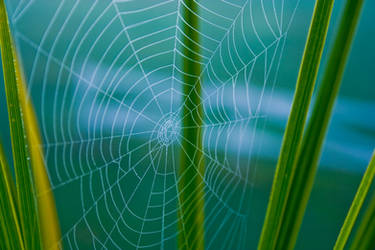 Spider Web Stock 2 by AreteStock