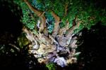 AK Tree of Life Night 30