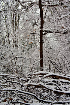 Winter Forest Stock 17