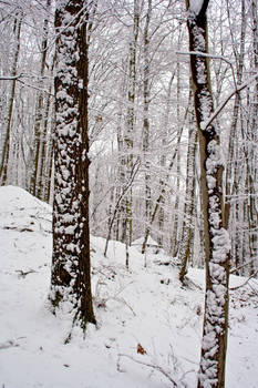 Winter Forest Stock 19