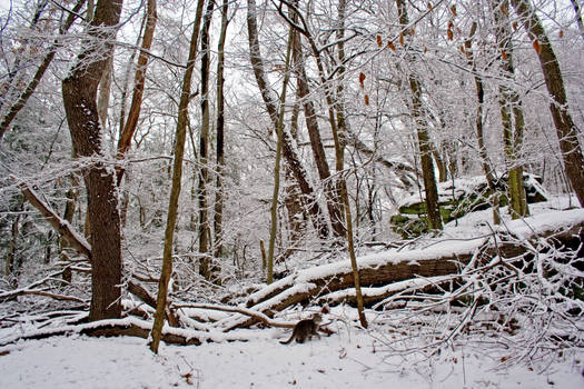 Winter Forest Stock 21