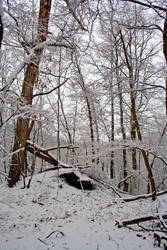 Winter Forest Stock 22