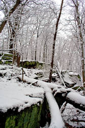 Winter Forest Stock 23
