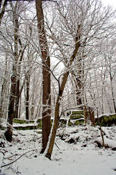 Winter Forest Stock 24