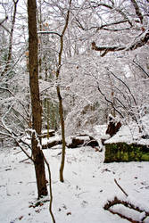 Winter Forest Stock 25