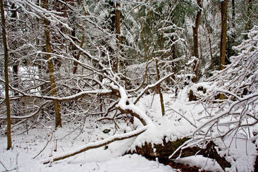 Winter Forest Stock 26