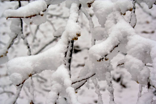 Winter Forest Stock 27