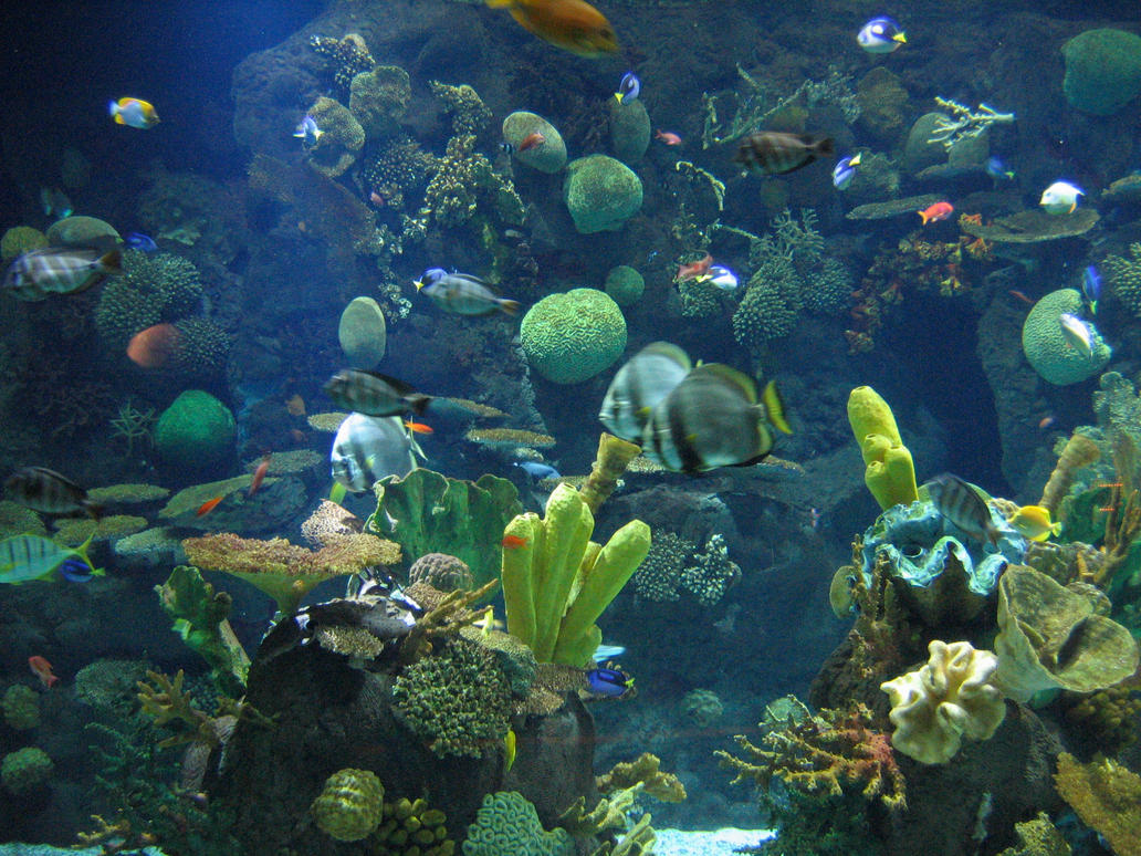 Columbus Zoo Aquarium 21 By Aretestock On Deviantart