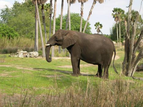 AK Elephants 12