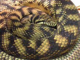 Columbus Zoo Snakes 10