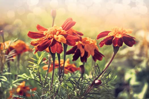Mom's garden of love