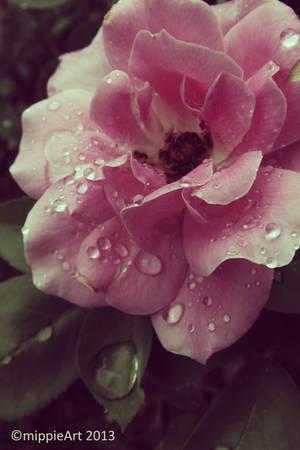 Eternal Rose by TriZiana