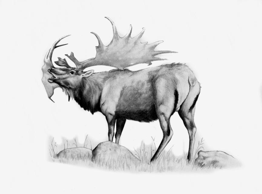 Megaloceros giganteus by rfcunha