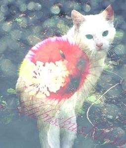 Hibiscusbloom by Deweyes