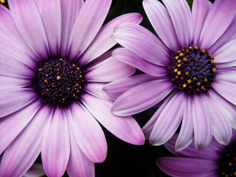 Purple Flower by EndlessFighter