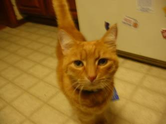 My friends cat by SilentStriker24