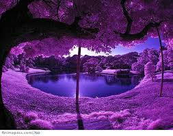 Purple Ocean by Chaos-Controle101MSP