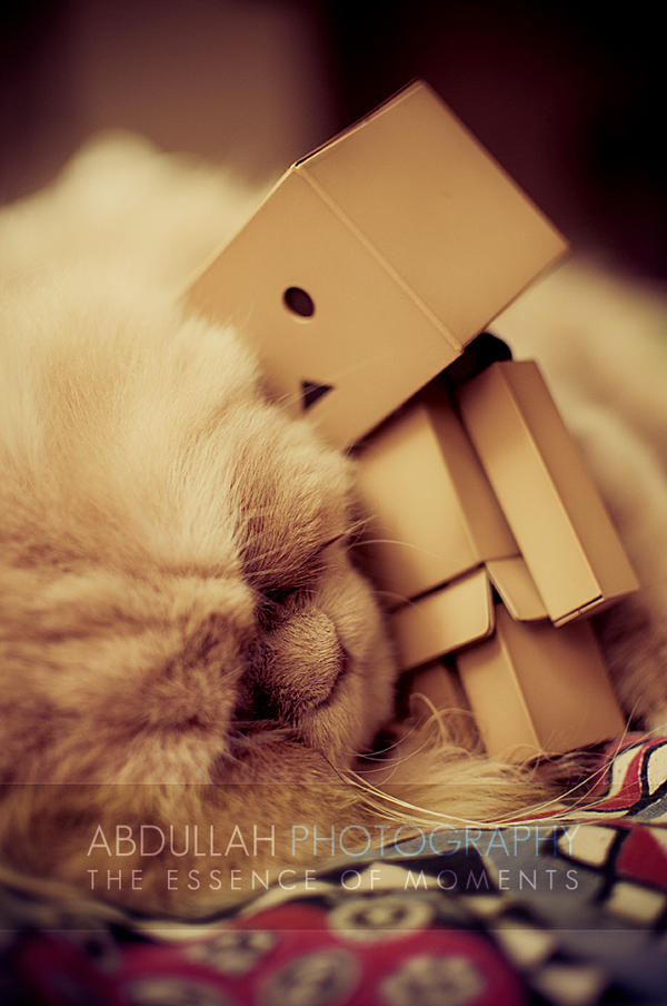Danbo heart Teddy by Cj-Caty
