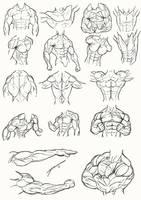 Male Torso Anatomy 2012