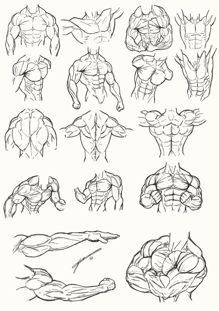 Male Torso Anatomy 2012 by Juggertha