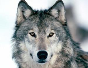 trenawolf's Profile Picture