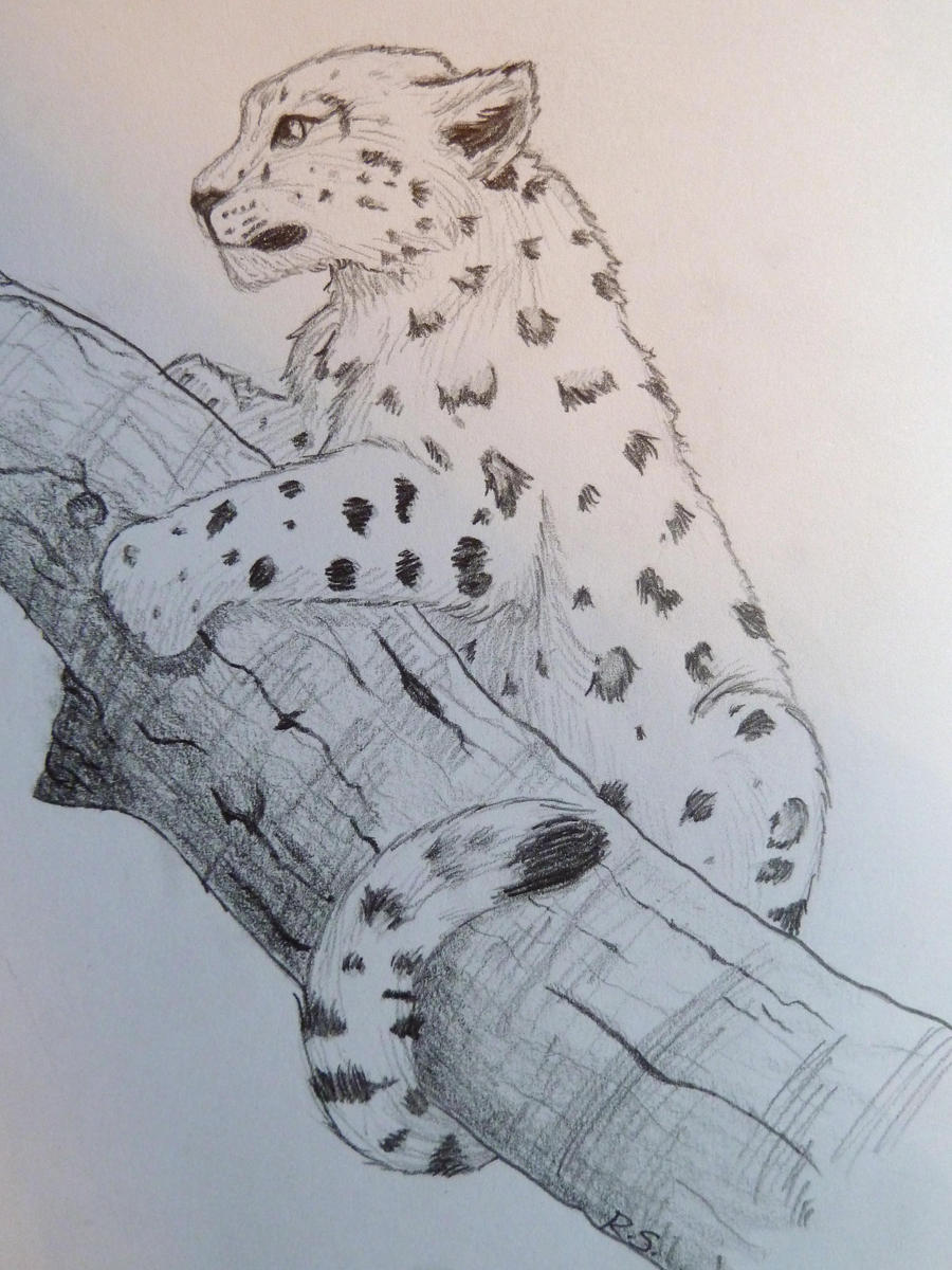 Cute Baby Snow Leopard Drawing