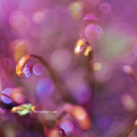 bokeh overload by illusionality