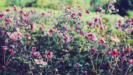 FLOWERS - 1920x1080 WIDESCREEN WALLPAPER
