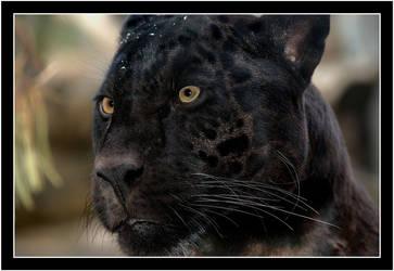 Mowgli's Head by Dr-Koesters