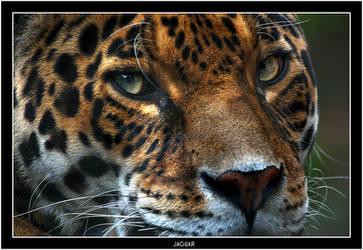 Jaguar Eyes by Dr-Koesters