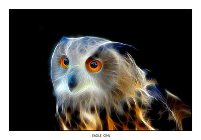 Eagle Owl F by Dr-Koesters