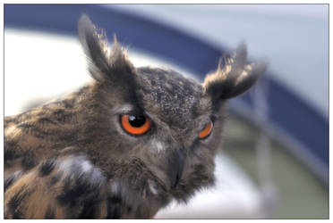 Eagle Owl by Dr-Koesters