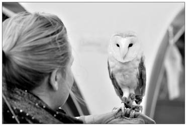 Eye to Eye with a Barn Owl by Dr-Koesters