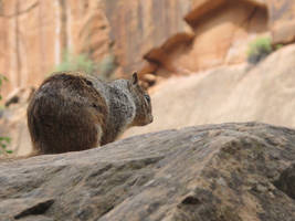 Mountain Squirrel by RozenGT