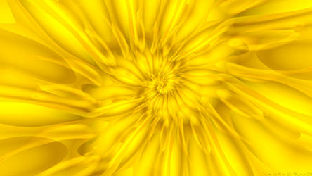 Warm, Sun Flower, Glow