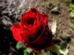 La Rouge