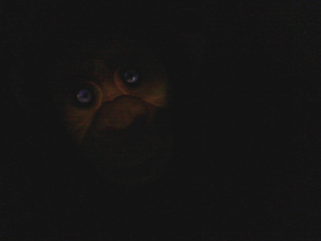 Sentient Puppet Monkey by xLeSpiderx